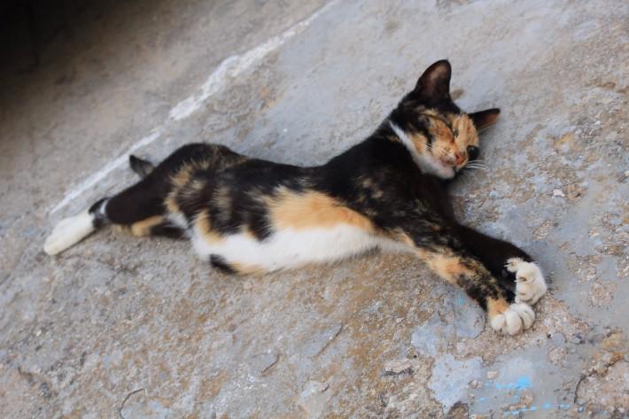 Cat Milos, Greece