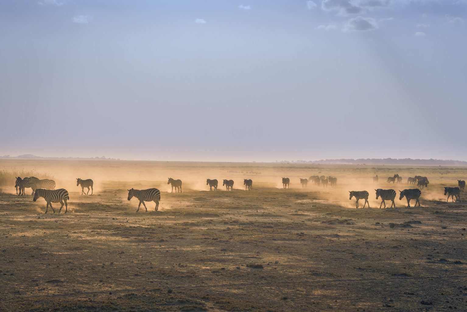 African Safaris How to Go Luxury for Less