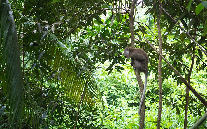 Chestnut-Nature-Park-monkeys-spotted