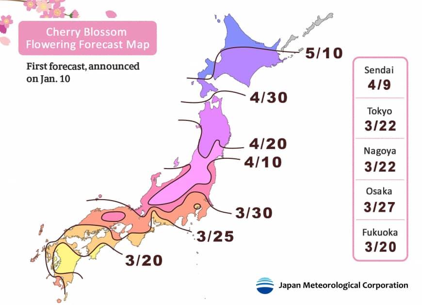 japan cherry blossom sakura forecast 2019
