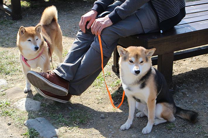 cute dogs of japan hokkaido