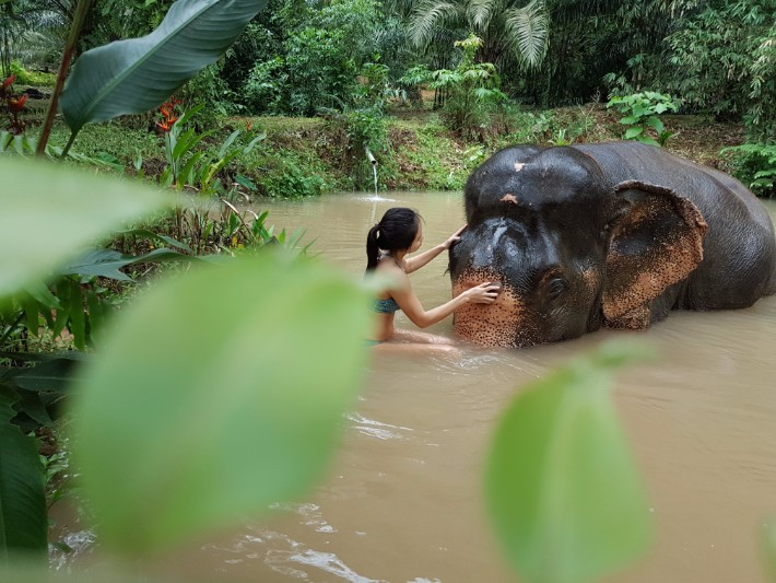 elephant sanctuary khao sok national park thailand