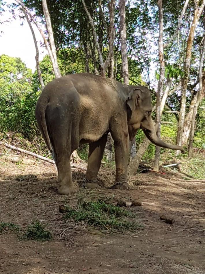 bintan wildlife safari animal farm elephant