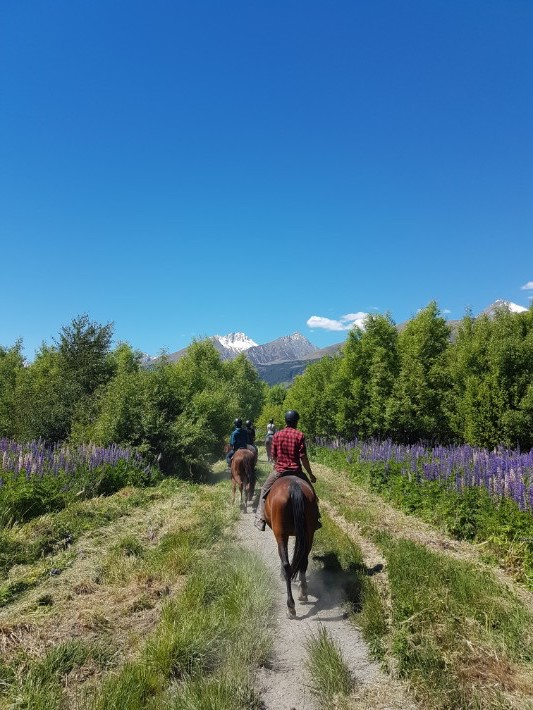 horse riding glenorchy new zealand