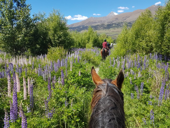 My First REAL Horse Riding in Glenorchy, New Zealand