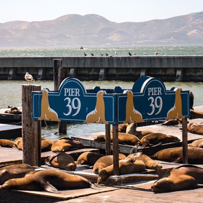 Aquarium, San Francisco