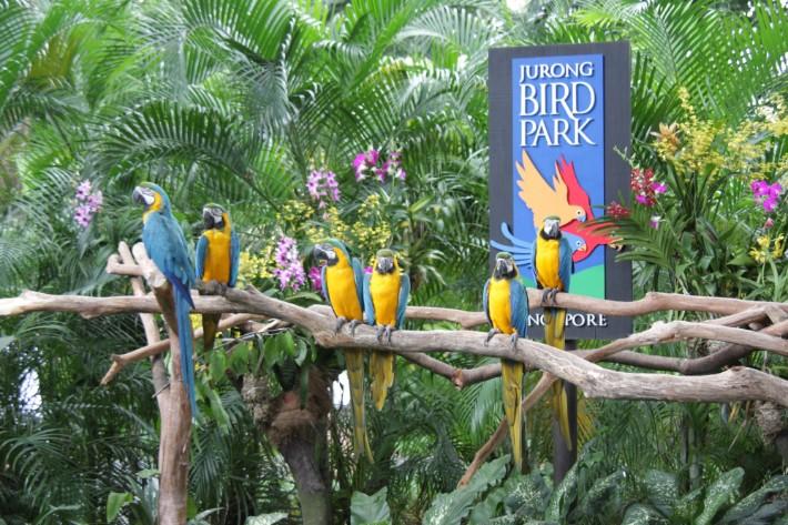 Jurong_Bird_Park_Singapore