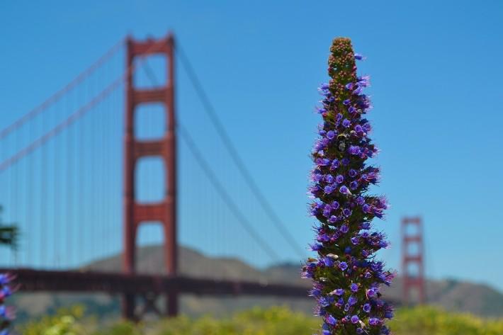 San Francisco - Golden Gate Park