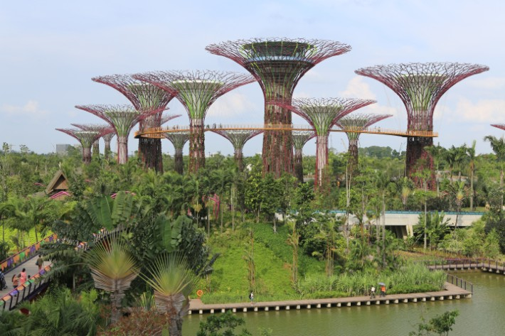 Supertree_Grove,_Gardens_by_the_Bay,_Singapore