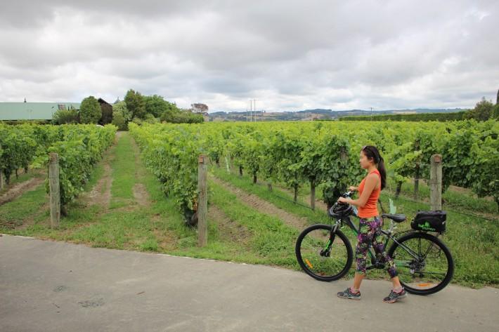 vineyard cycle, Great Taste Trail Nelson, New Zealand