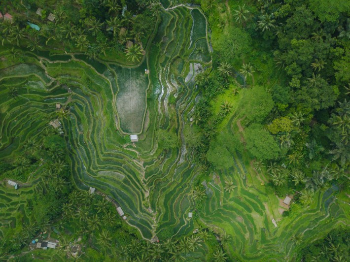 Ubud, Bali, Indonesia - somethingoffreedom; Best drones for travel