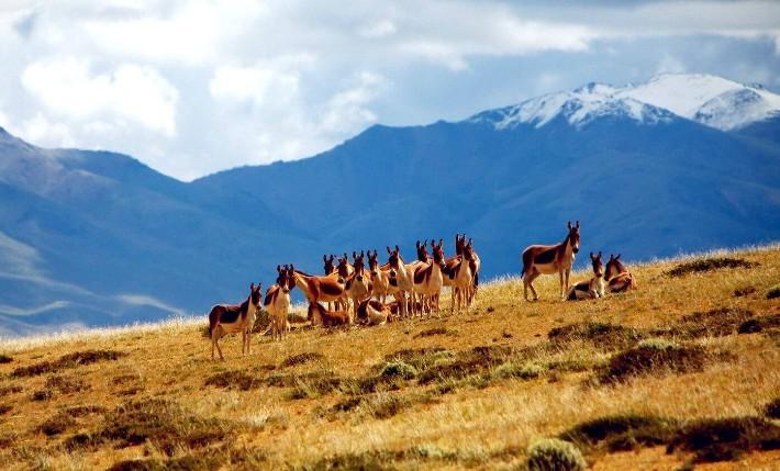 kekexili, why visit tibet travel