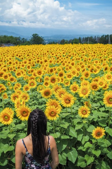 sunflower field japan girl