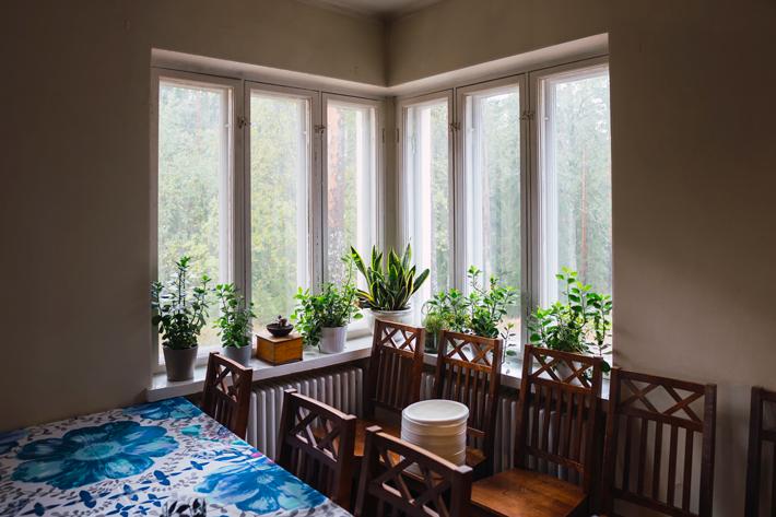 fern plants eco green window Nuuksio National Park