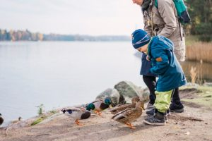 child feed ducks fun, Seurasaari Open-Air Museum, Helsinki