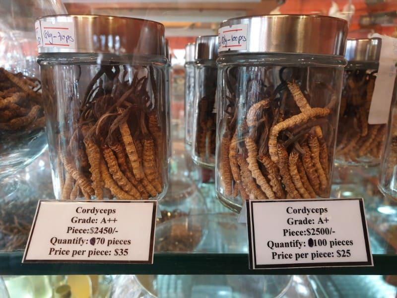 cordyceps, bhutan souvenir