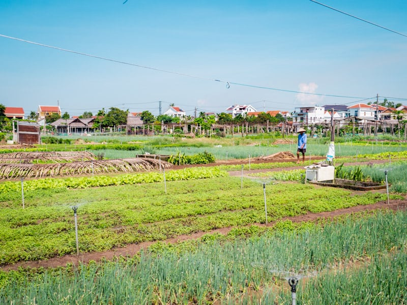vegetable-farm-Things-to-do-in-Hoi-An-Vietnam