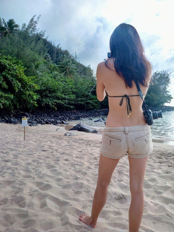 seal on beach, kauai, hawaii