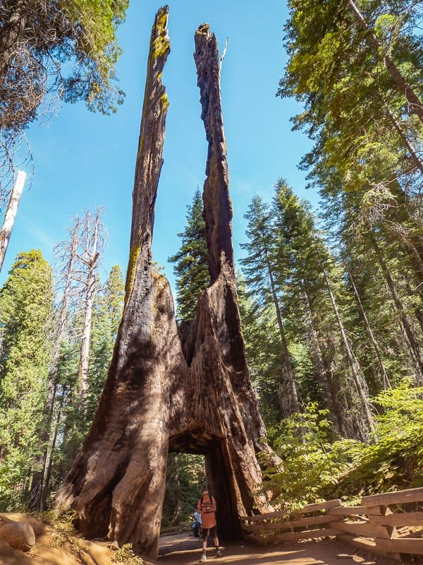 giant-sequoia-trees-things-to-do-around-Yosemite-National-Park-Tuolumne-California