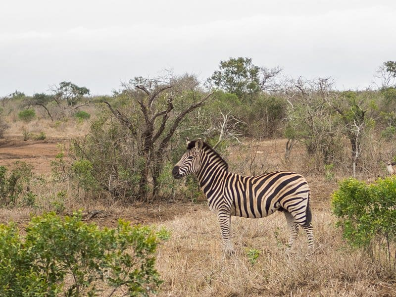 Thanda-Safari-South-Africa