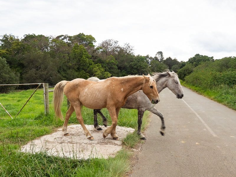 Hog-Hollow-Horse-Trails-Plettenberg-Bay-South-Africa